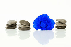Blue Rose and stones Stock Photo