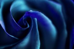 Blue rose with a twisted center Stock Photo