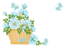 Blue roses in a basket Stock Photo