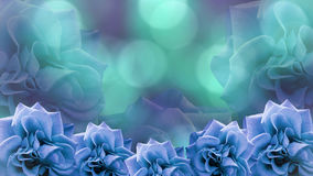 Blue roses flowers  on blurred turquoise-violet bokeh background. floral background. colored wallpaper for design. Stock Photos
