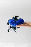 Blue Roses resting on Palm of Woman`s Hand stock photos