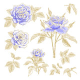 Blue roses set Stock Photography