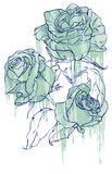 Blue roses. Vector illustration representing an arrangement of cut blue roses Royalty Free Stock Images
