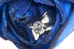 Blue roses and wedding rings. On white background Royalty Free Stock Photo