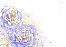 Blue roses on white background Stock Images