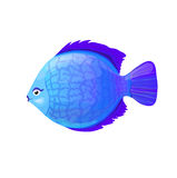 Blue round coral fish in cartoon style,  illustration. Isolated on white Stock Photos
