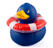 Blue Rubber Duck. Wearing a floation ring stock photos