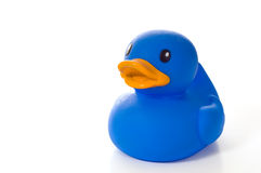 Blue Rubber Duck with Copy Space Stock Images