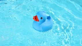 A blue rubber duck is easy to float on the crystal clear water stock video footage