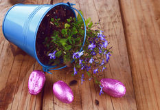 Blue rustic bucket with spring flowers and Easter eggs on wooden background. Metal blue rustic bucket with planted blue spring flowers flipped over on wooden royalty free stock image