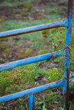 Blue rustic corral gate. Vertical image of a blue rusted corral gate with red berries and yellow broomweed wildflowers royalty free stock photos