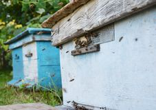 Blue rusty wooden beehives with honey bees royalty free stock image
