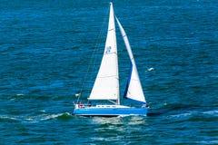 Blue Sailboat. San Francisco, CA, USA - May 21, 2016:  Blue sailboat cruising in the San francisco Bay Royalty Free Stock Photo