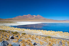 Blue salt lake with flamingos on the Bolivian Andes Royalty Free Stock Photos