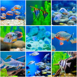 Blue saltwater world in aquarium Royalty Free Stock Photo