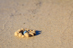 Blue Sand Crab Royalty Free Stock Images