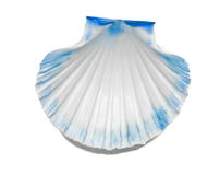 Blue scallop Royalty Free Stock Photos
