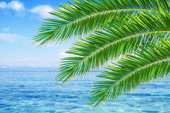 Blue sea clouds on sky and palm tree leaves Stock Images