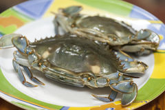 Blue sea crab Stock Image