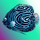 The blue sea fish. A vector blue sea  fish from ocean Stock Photos