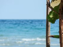 Sea and the green trees royalty free stock photography