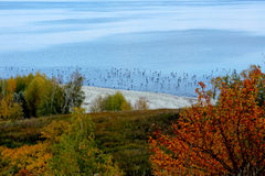 Blue sea with migratory birds cormorants on background of autumn forest Royalty Free Stock Photo
