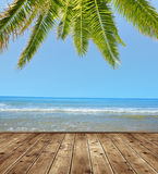 Blue sea with palm tree Stock Images