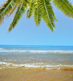 Blue sea with palm tree Stock Image