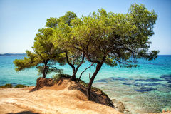 Blue sea and pine trees Royalty Free Stock Images