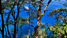 Blue sea at Portofino Coast Park, Riviera, Italy Royalty Free Stock Image