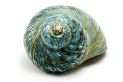 Blue Sea Shell stock photo
