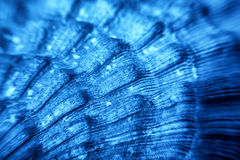 Blue Sea shell texture Royalty Free Stock Image
