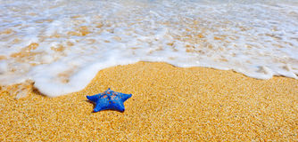 Blue sea star at the sand beach