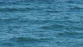 Blue Sea Waves stock video