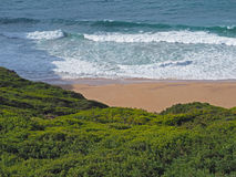 Blue sea waves on a sand beach with fresh green vegetation Royalty Free Stock Image