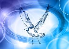 Blue seagull Stock Photos