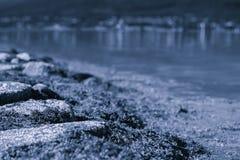 Blue sepia seaweeds landscape background Royalty Free Stock Photo