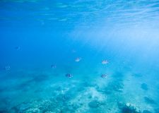 Blue shallow waters with white sand seabottom. Tropical seashore undersea photo. Marine ecosystem with animal in sunlight. Exotic island sea snorkeling scene Stock Photos