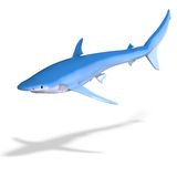 Blue shark Stock Images