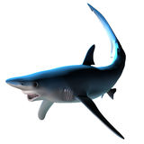 Blue Shark Royalty Free Stock Photo