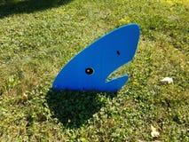 Blue shark on green grass stock photos