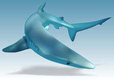 Blue Shark. (Prionace glauca) - Illustration, Vector Royalty Free Stock Images
