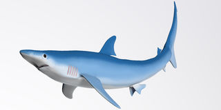 Blue Shark Profile Stock Photography