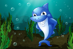 A blue shark under the sea. Illustration of a blue shark under the sea Royalty Free Stock Photos