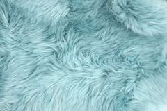 Blue sheep fur Natural sheepskin background Wool texture royalty free stock photo