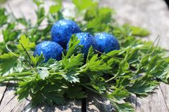 Blue Easter eggs with green herb on the wooden table stock photo