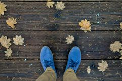 Blue shoes and fallen maple leaves Royalty Free Stock Photos