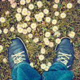 Blue shoes in lawn from above. Blue shoes in lawn with daisies from above Stock Photography
