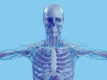 Blue skeleton on fun blue studio background. Graphic,design,modern. Royalty Free Stock Photo