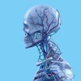 Blue skeleton on fun blue studio background. Graphic,design,modern. Stock Photo